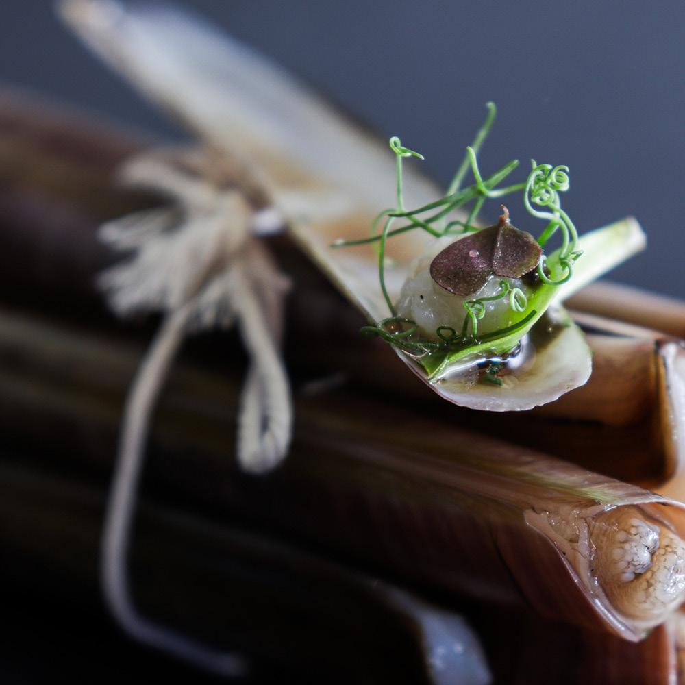 Studio Marly - Creative Agency - High Cuisine